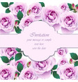 roses flower invitation card delicate vector image