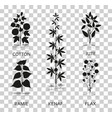 cotton ramie kenaf jude and flax plants with vector image
