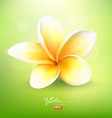 Plumeria flower on nature background vector image vector image