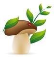 mushroom cep vector image