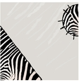 Abstract zebra background vector image