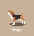 an depicting beagle dog cartoon vector image
