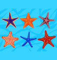set of colourful realistic starfishes underwater vector image