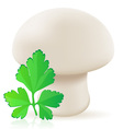 mushroom champignon vector image