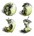 Apple sketches vector image