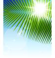 palm leaf1 vector image vector image