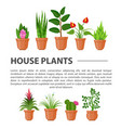 home flowers and plants vector image