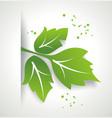 Fresh green leaf organic eco friendly symbol vector image