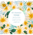 chamomile flower card delicate floral vector image