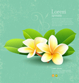Frangipani flower of thailand with green leaf vector image