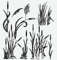 Reeds vector image vector image