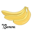 Fruit banana vector image