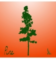 Pacific northwest pine old growth evergreen tree vector image