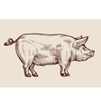 Sketch pig Hand drawn vector image