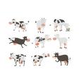 Cartoon cow characters vector image