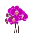 Purple orchid branch on white background vector image vector image