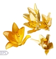 lily flowers set with light isolated on white vector image