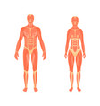 medical 3d of the male and vector image