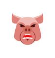 angry pig evil boar grumpy hog aggressive piggy vector image