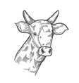 hand drawn cows head vector image