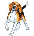 beagle hound vector image