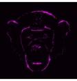 Monkey silhouette of purple lights vector image