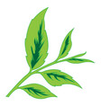 color image of tea leaves vector image