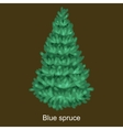 Christmas tree like blue spruce for New vector image