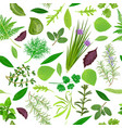 cooking herbs seamless pattern set vector image