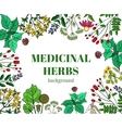 Wild medicinal herbs background vector image