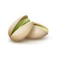 two pistachio nuts vector image vector image
