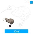 Kiwi bird learn to draw vector image
