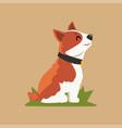 cartoon welsh corgi dog sitting on green grass vector image