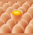 fresh farm eggs group vector image