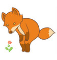 cartoon fox looks at flower vector image