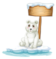 A sad bear above the iceberg with an empty vector image vector image