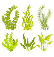 underwater seaweed elements vector image