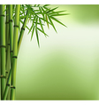 Green bamboo grove isolated on green background vector image