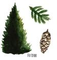 Fir tree watercolor vector image
