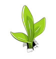 Young sprout vector image