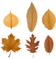 Dry leaf collection vector image