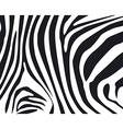 zebraskin2 vector image