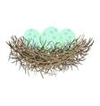 Green wild eggs in bird nest vector image