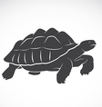 Turtle on white background vector image vector image