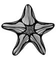 Black contour starfish vector image