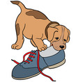 dog gnaw shoecartoon picture isolated on white vector image