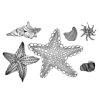Shells and star vector image