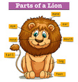 Diagram showing parts of lion vector image
