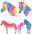Colorful zebras set vector image