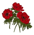 Red flower of anemone isolated vector image